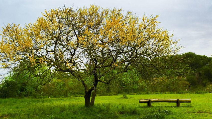 Park... ArtWork Beautiful Art Uruguay Pic Fotografia Photography Picture Food Nature Beauty In Nature Flower Green Color Yellow And Green Yellowflower