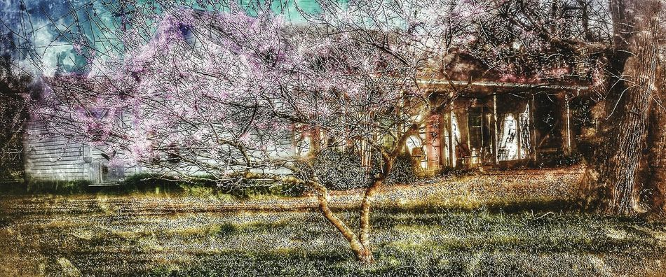 Spring has arrived to Richwood ,Texas Richwood Texas Pastel Power HDR Enjoying Life Hello World Streamzoofamily 2016 Iseetheworldinhdr Thingsthatmakemesmile Hdr_gallery Hdr Edit Hdroftheday Hdr_Collection Streamzoo Family Texas EyeEm Nature Lover Newperspective Hdr_lovers Clouds Amazing What Does Peace Look Like To You? Dramatic Edit Blooming About To Bloom