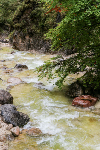 Water Nature Beauty In Nature Rock - Object Tranquility Nationalpark Berchtesgaden Berchtesgaden Almbachklamm Klamm Herbst Nature Photography Autumn Bavaria Bayern Tranquil Scene Flowing Water Power In Nature Water And Rocks Green Color