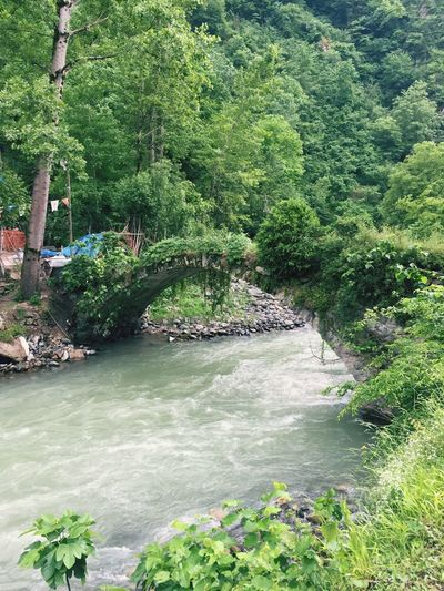 Share Your Adventure Nature Nature_collection Bridge Ancient Architecture Green River Forest Water_collection Stone