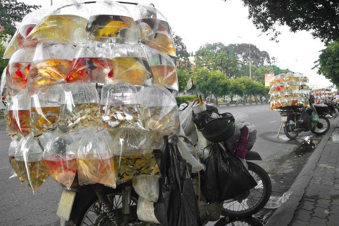 Ho-Chi-Minh City Hoi An