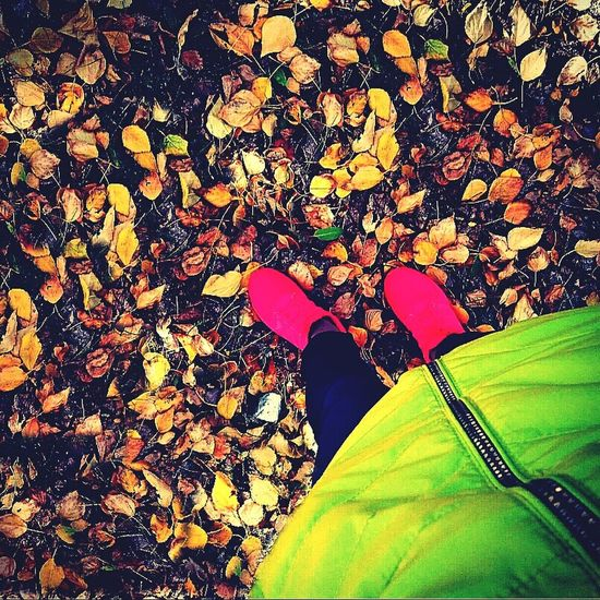 I think that many people like the rustling of fallen leaves under their feet. Looking at this photo, try to plunge into the golden autumn, the last warm days and get out in the park with fallen leavesAutumn🍁🍁🍁 Warm Days Rustling A Life