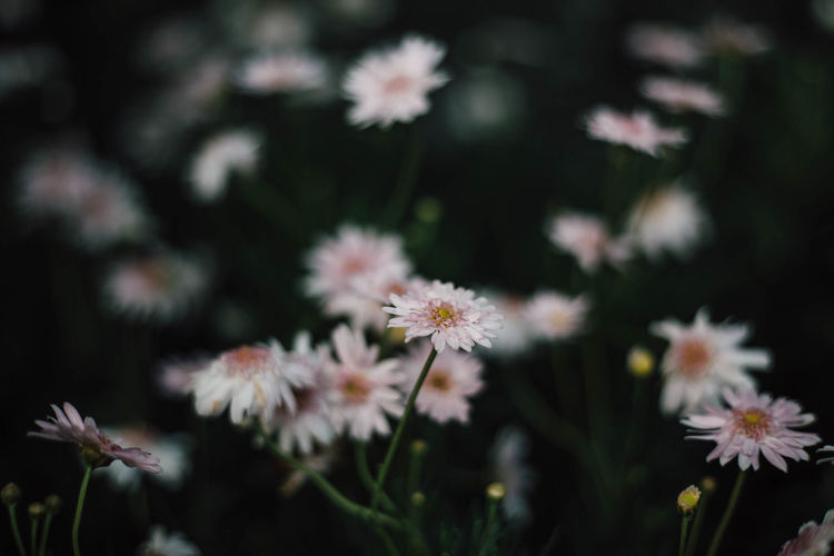 Backgrounds Beauty In Nature Close-up Flower Flowering Plant Nature Photography Ping Color Ping Flowers Plant Springtime Vulnerability