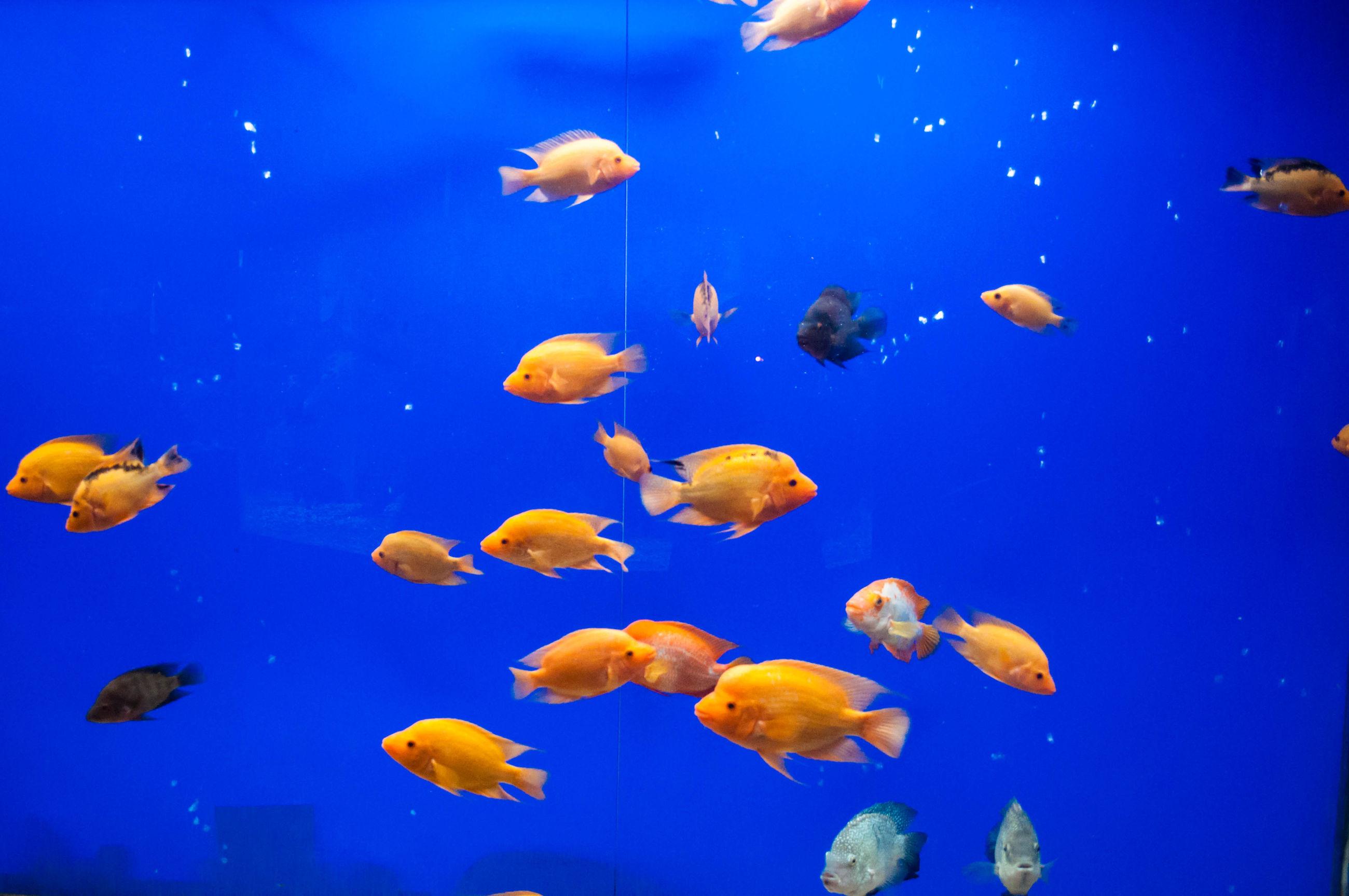 underwater, swimming, sea life, animal themes, water, blue, fish, undersea, wildlife, animals in the wild, sea, nature, beauty in nature, school of fish, yellow, transparent, jellyfish, close-up, aquarium