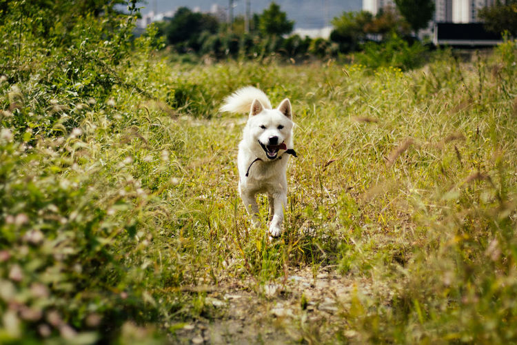 Low angle view of dog running on grassy field