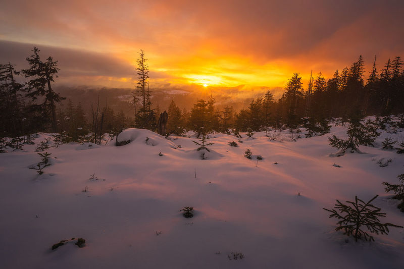 Scenic view of snow covered plants against orange sky