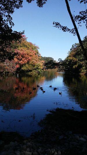 Ducks Water Reflection Outdoors Showmetheworld Taking Photos Connecticut Pics Calm