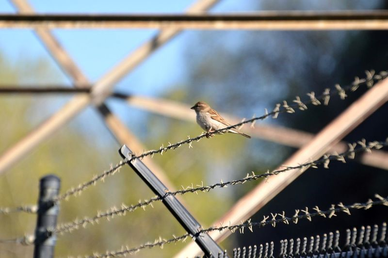 Low angle view of bird perching on fence