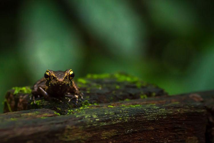 Portrait Of Frog On Tree Trunk