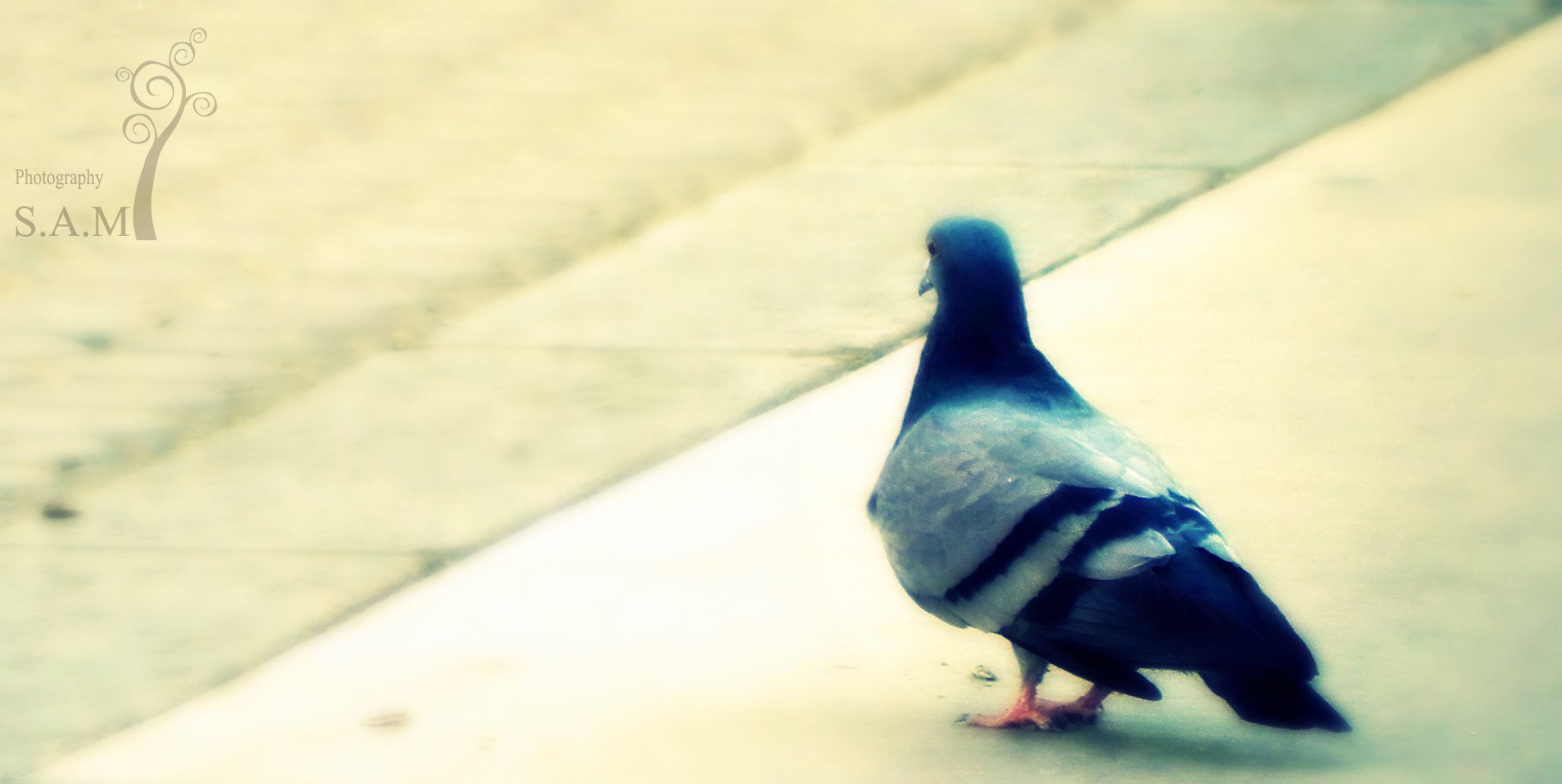one animal, animal themes, high angle view, shadow, pets, street, black color, wildlife, bird, full length, domestic animals, sunlight, outdoors, walking, animals in the wild, footpath, day, close-up, sidewalk, no people