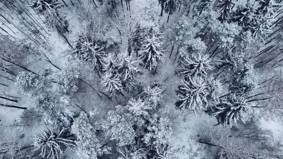 Full frame shot of snow covered plants in forest