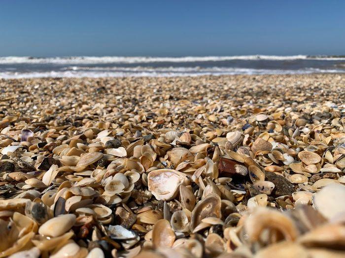 Beach Sea Water