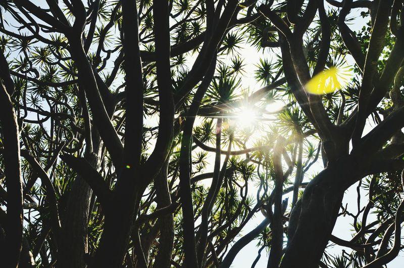 Sunny illumination Sunbeam Lens Flare Tree Outdoors Sunlight Beauty In Nature Tranquility Beauty In Nature Neverstopexploring  Lifeofadventure Getoutside Vacations Wanderlust The Week On EyeEm An Eye For Travel