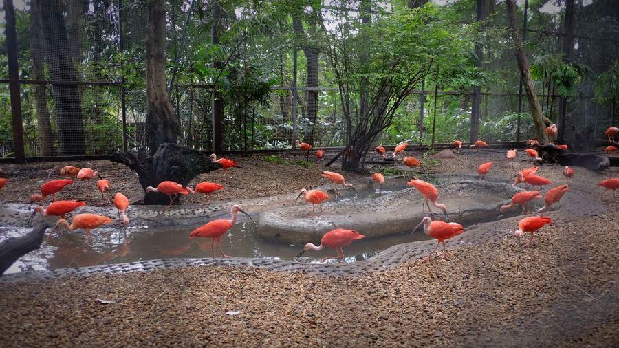 Tree Flamingo