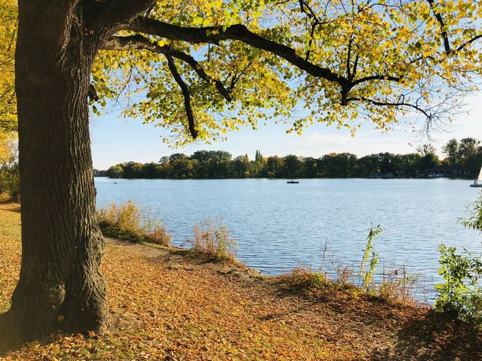 Herbst Hannover Herbst Fall Autumn Water Tree Plant Lake Tranquility Beauty In Nature Scenics - Nature Sky Reflection Branch Idyllic Lakeshore Day Nature Tranquil Scene No People Growth Outdoors