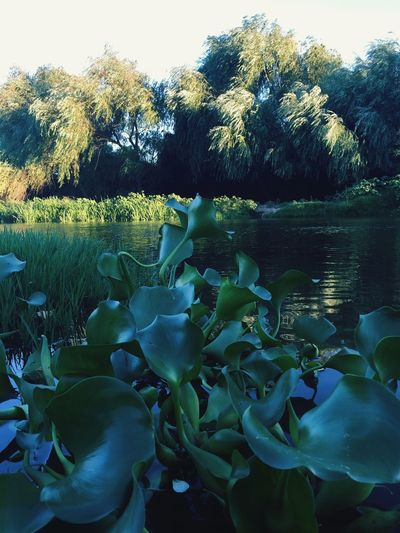 Down by the river,