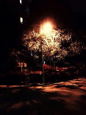 Hugging A Tree Light up my way.❤️