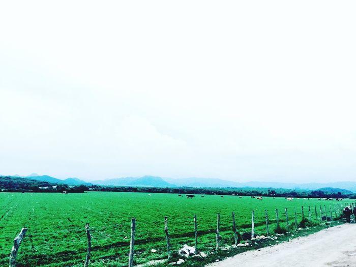 Parcela. Parcela Ismaelarcephotogallery Green Sinaloa