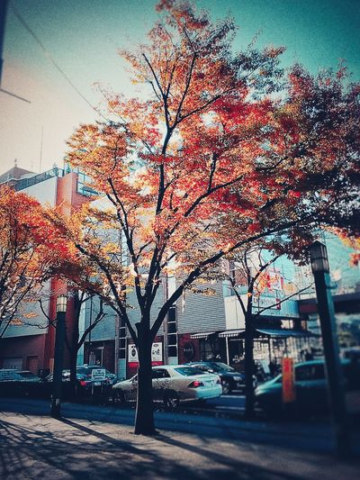 Building Exterior Tree City Sky Sunset Architecture No People Built Structure Outdoors Day Skyscraper Urban Skyline 北九州 小倉 Japan Kitakyushu Kokura Yellow Growth Architecture Tree Fukuoka Real People Cold Temperature