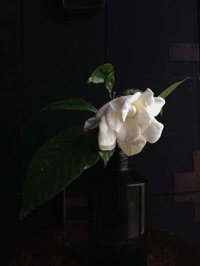 The last Gardenia 2015. EyeEm Nature Lover Flowers TheMinimals (less Edit Juxt Photography)