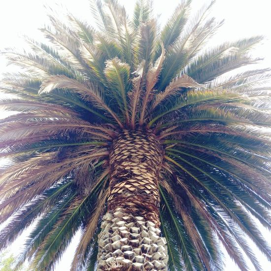 CALI IS THE PLACE TO LIVE!! <3 Cali ❤ California Love Palm Trees Pretty