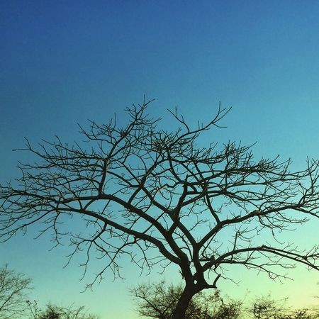 Bare Tree Beauty In Nature Branch Clear Sky Dead Plant Growth Light Low Angle View Majestic Nature No People Outdoors Remote Scenics Silhouette Tranquil Scene Tranquility Tree Tree Trunk Twig