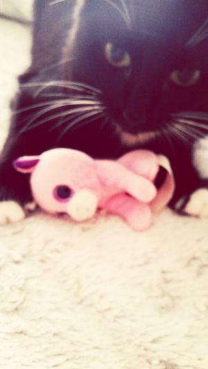 My Beautiful Salome Cute Baby Kitty