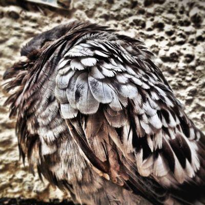 Old Soul in Colour Vscocam Bird Pigeon IPSContest love tweegram instagood photooftheday iphonesia instamood igers instagramhub picoftheday instadaily bestoftheday igdaily instagramers webstagram follow statigram life