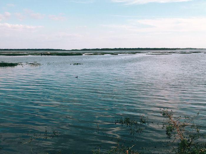 Kissimmee Lake View Everglades  Florida Blue Wave