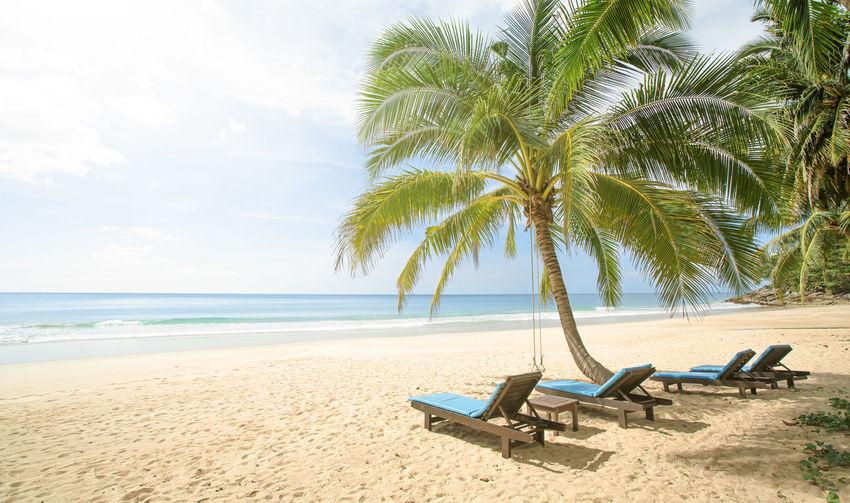 Coconut palm trees on beach against sky