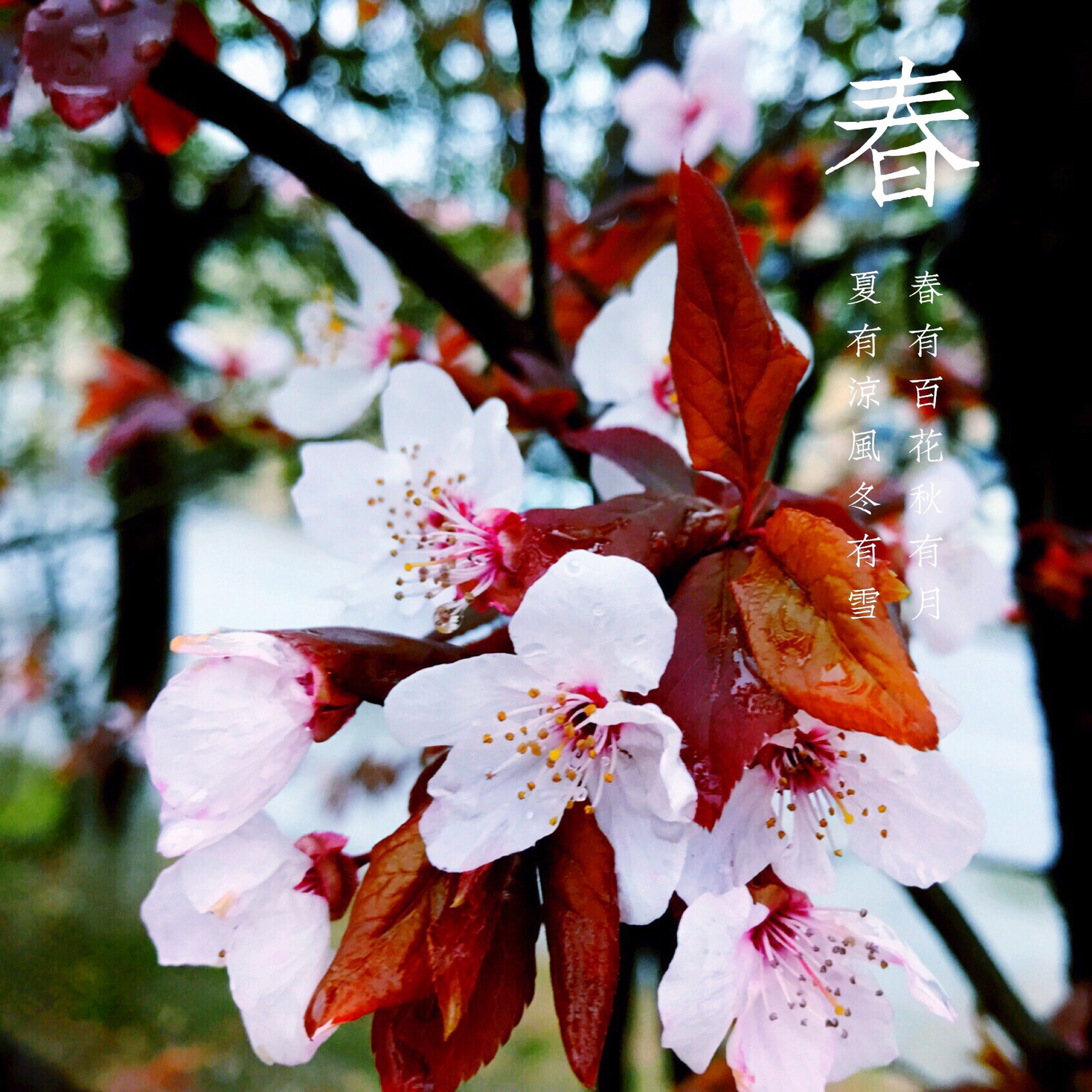 nature, fragility, beauty in nature, growth, close-up, flower, no people, outdoors, freshness, branch, day, tree, flower head, plum blossom