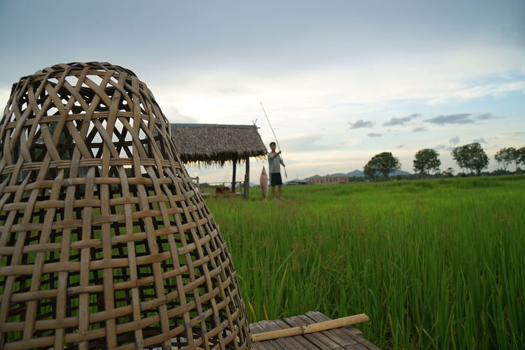 Rice Paddy Field Agriculture Sky Grass Landscape Travel