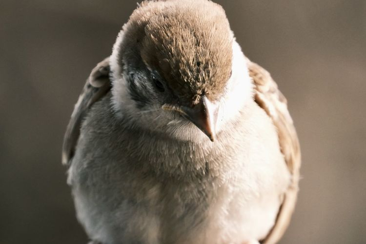 Close-up of a bird against blurred background