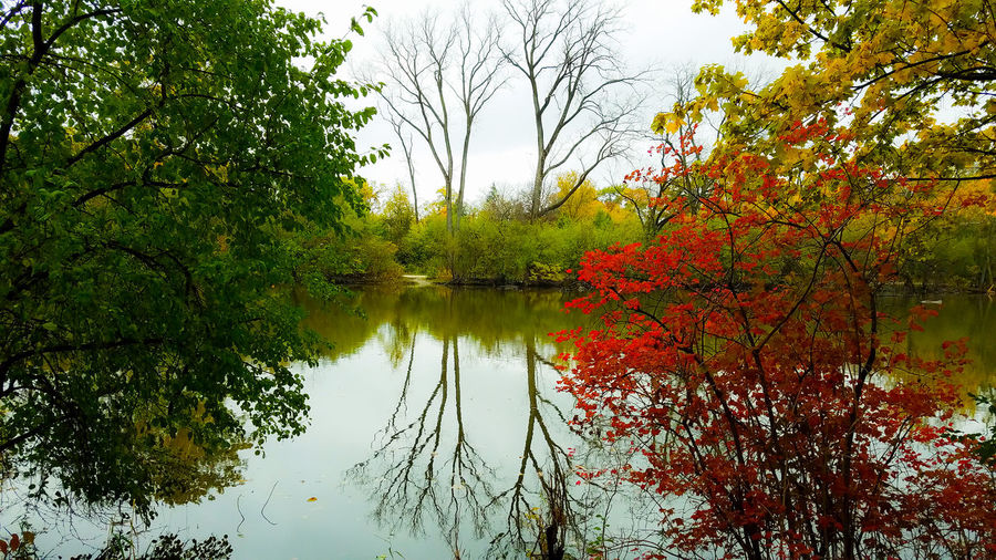 Reflection Tree Water Nature Growth Branch LeafGrass EyeEmNewHere Oak Brook Illinois Fullersburg Woods Fall_collection Reflection_collection Fall Leaves plant Tranquility Scenics No People Sky Forest Fall Fall Colors Salt Creek River Fall Beauty Nature