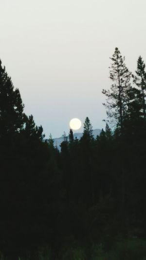 Moonlight over