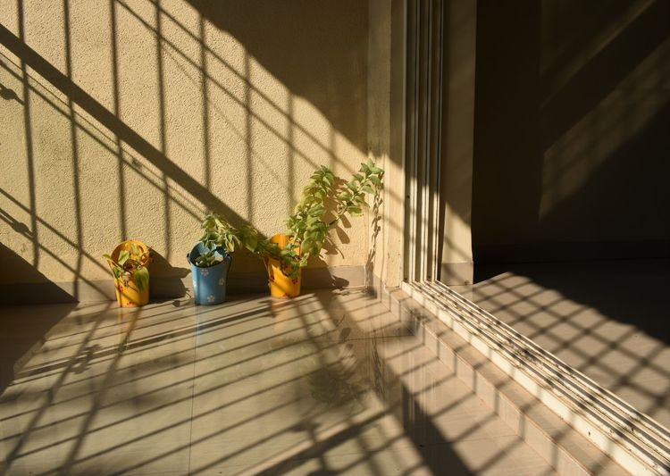 Potted plant on steps against wall
