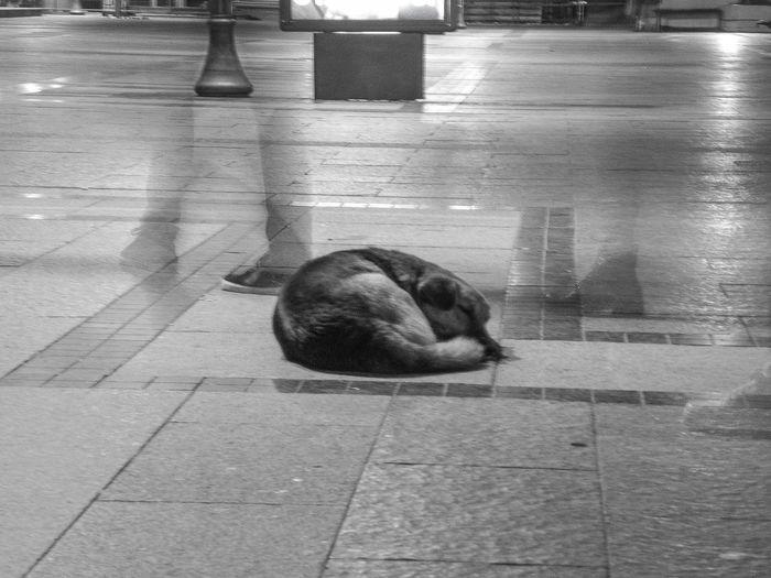 Cat sleeping on tiled floor