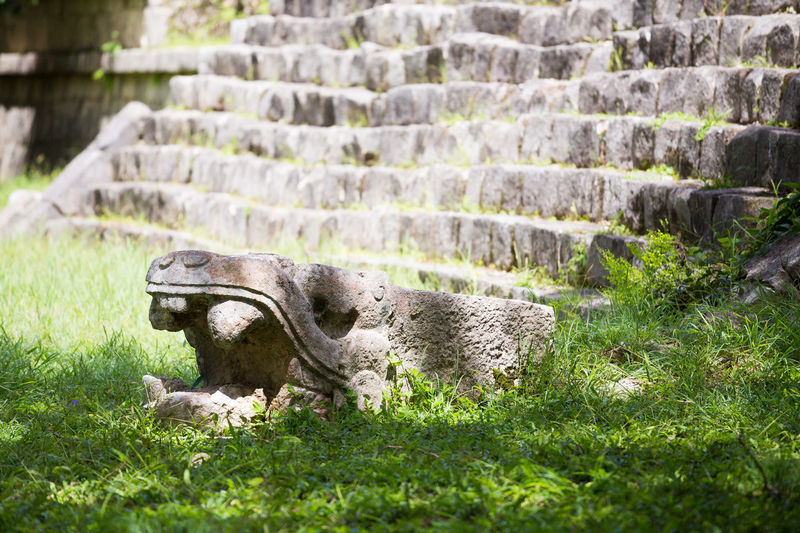 Ancient Maya sculpture in Chichen Itza, México. Grass Plant Nature No People Day Animal Field History One Animal Mammal The Past Land Architecture Solid Vertebrate Animal Wildlife Green Color Ancient Animals In The Wild Stone Wall Ancient Civilization Archaeology Chichen Itza Yúcatan Mayan