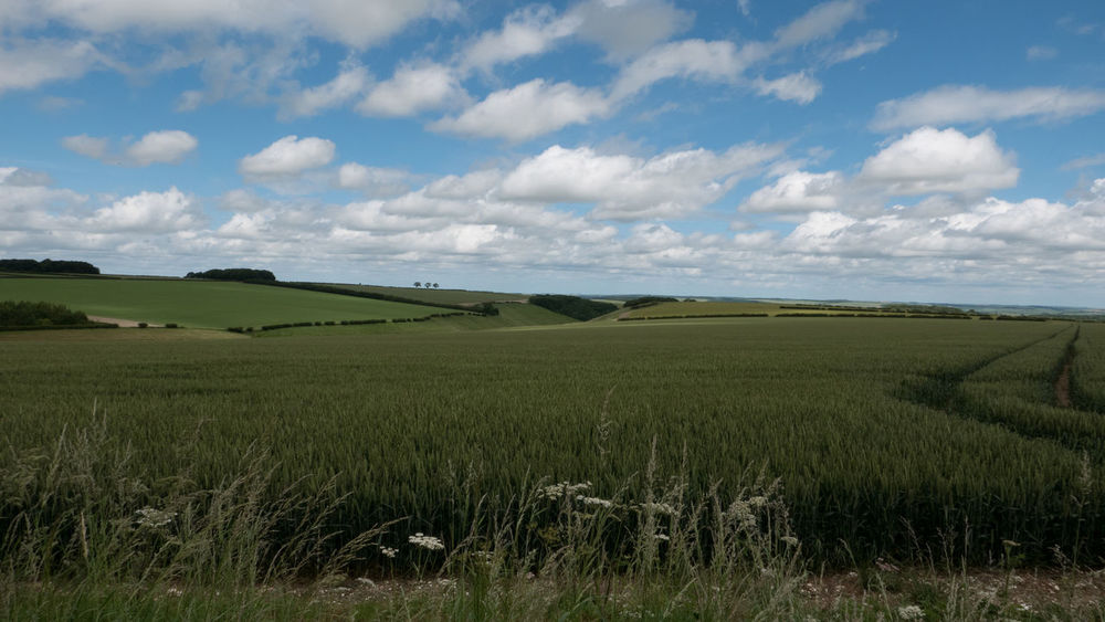 Yorkshire Wolds Agriculture Agriculture Beauty In Nature Cloud - Sky Clouds Countryside Creativity Day Field Fields Grass Green Color Growth Landscape Nature No People Outdoors Rural Scene Scenery Scenics Sky Tranquil Scene Tranquility Wolds Yorkshire