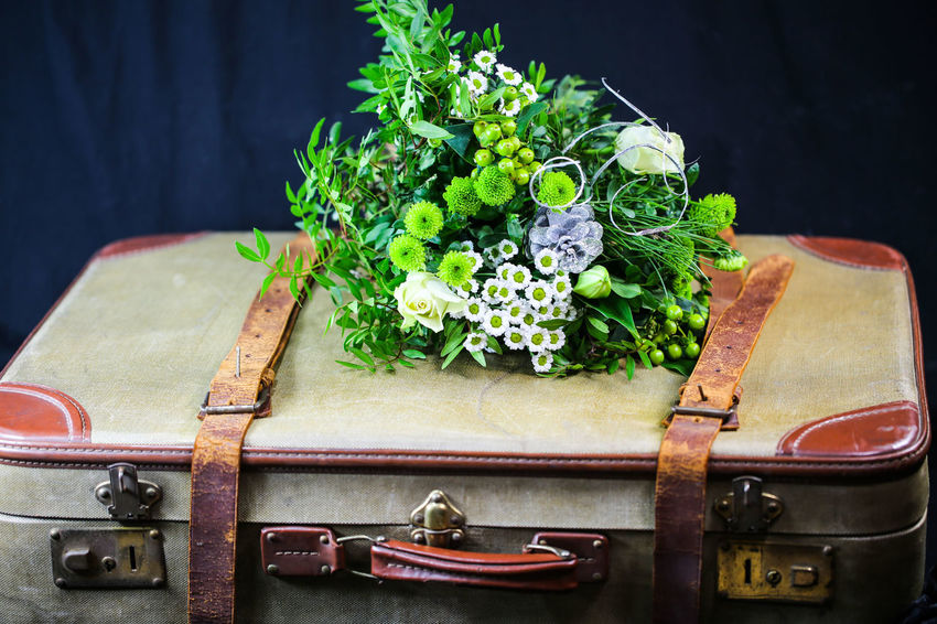 Old Suitcase Freshness Food No People Cutting Board Healthy Eating Close-up Vegetable Food And Drink Indoors  Still Life Plant Wellbeing Herb Nature Focus On Foreground Green Color Table Day Studio Shot Wood - Material Black Background Tray Chopped