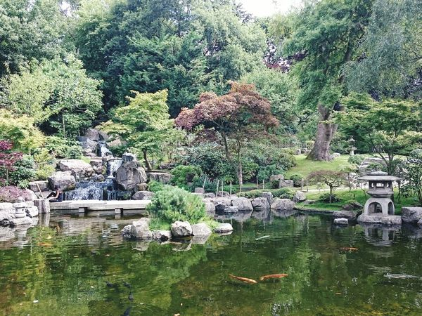 Gardening London Park Kyoto Garden Reflection Carpe