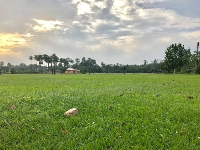 Field Grass Tree Sky Nature Growth Cloud - Sky Green Color Landscape Beauty In Nature Tranquil Scene Tranquility No People Scenics Agriculture Outdoors Rural Scene Day Grass Area Sunset Mix Yourself A Good Time