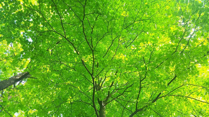 Natural nature Green Color Tree Beauty In Nature Low Angle View Outdoors Freshness Growth