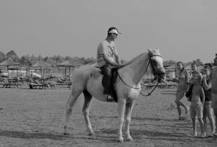 Albania Horse Cavallo Plazh Spiaggia Beach Sea Deti Mare Shqiperia