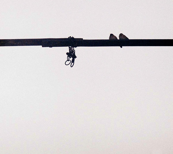 Freedom Abstract Birds Film Photography Filmnotdead No People Silhouette