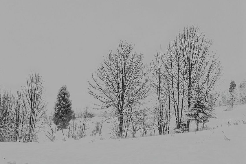 Cisna, Bieszczady Mountains, Bacówka pod Honem Cold Monochrome Blackandwhite Cisna Frost Bieszczady Art Fineart Bieszczadymountains Fineartphotography Bacowkapodhonem Winter Snow Cold Temperature Pine Tree Pinaceae Forest Tree Mountain Landscape Outdoors Nature No People Day Beauty In Nature Scenics Tree Area Snowing Sky Shades Of Winter The Great Outdoors - 2018 EyeEm Awards The Traveler - 2018 EyeEm Awards