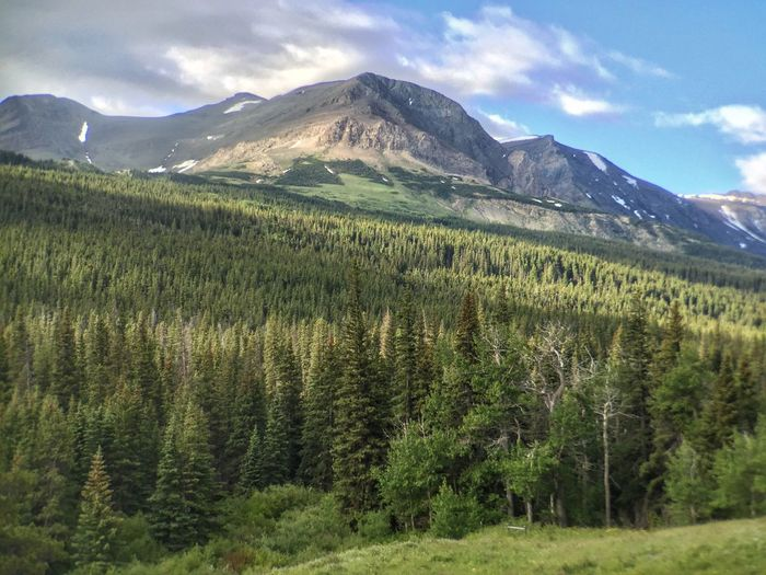 Landscape of gently sloping Pine trees and a mountain at the top Glacier National Park Cut Bank Campground Mountain Beauty In Nature Mountain Range Nature Scenics Tranquility Day Tranquil Scene Cloud - Sky No People Outdoors Wilderness Landscape Sky Tree