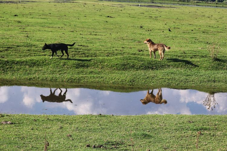 Reflection Dogs