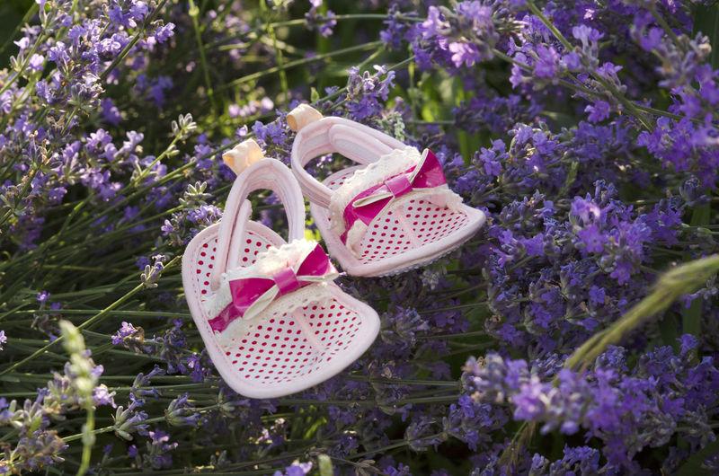 Baby booties on purple flowers