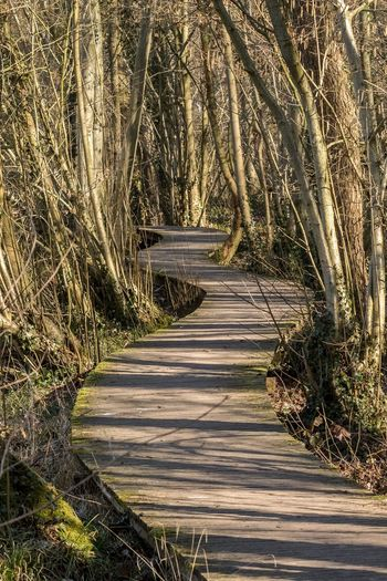 Beauty In Nature Nature Outdoors Pathway Scenics The Way Forward Tranquil Scene Tranquility Wooden Pathway